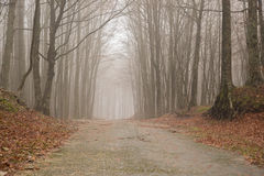 ścieżka mgłowa Zdjęcia Royalty Free