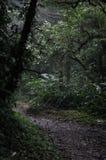 ścieżka mgłowa Fotografia Royalty Free