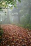 ścieżka mglista zdjęcie royalty free