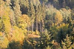 Ścieżka między drzewami jesienni lasy wewnątrz w Kokorinsko krajobrazu terenie w republika czech przy rankiem Zdjęcie Stock