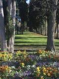 Ścieżka między drzewami obrazy royalty free