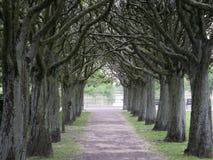 Ścieżka między drzewami w parku fotografia royalty free