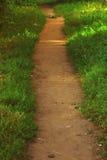 Ścieżka między niskimi ziele Obraz Royalty Free