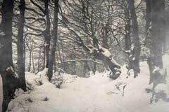 Ścieżka na gothic lesie z śniegiem Monte Cucco w Umbria fotografia stock