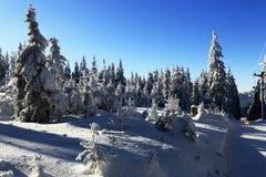 Ścieżka na Pancir, zima krajobraz, Zelezna Ruda, republika czech Zdjęcia Stock