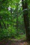 Ścieżka naturalnym mieszanym stojakiem Bieszczady góra obrazy stock