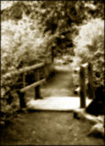 ścieżka nierzeczywiste las Fotografia Stock