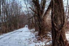 ścieżka objętych śnieg Obrazy Royalty Free
