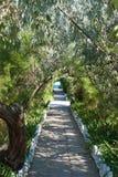 Ścieżka od kamiennych cegiełek prowadzi morze ocean wśród krzaków i drzew łozinowy ogrodzenie Zdjęcie Royalty Free