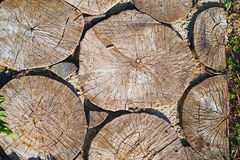 Ścieżka od mierzei drzewo, tło Obrazy Stock