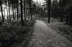 ścieżka park Fotografia Stock