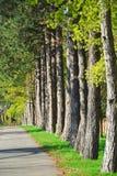 ścieżka park Zdjęcia Royalty Free