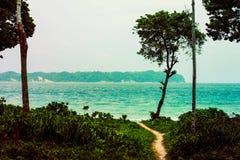Ścieżka po środku lasu w kierunku plaży fotografia royalty free