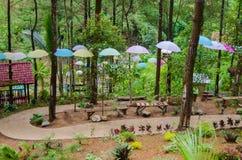 Ścieżka po środku sosnowego lasu Zdjęcia Royalty Free