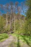 Ścieżka prowadzi drewniany footbridge nad Robecsky potoka zatoczką w Peklo dolinie w wiosny Machuv kraju regionie Zdjęcie Royalty Free