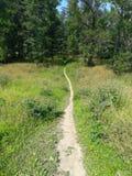 Ścieżka prowadzi las obraz royalty free