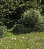 Ścieżka prowadzi las Obraz Stock