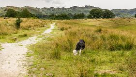 Ścieżka prowadzi przez pola w kierunku lasu zdjęcie stock
