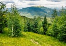 Ścieżka przez łąki w lesie na zboczu w górach Obraz Stock