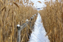 Ścieżka przez bagna w zima Zdjęcie Stock