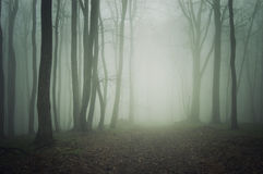 Ścieżka przez ciemnego lasu z mgłą Obrazy Royalty Free
