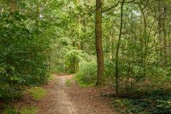Ścieżka przez drewien Obrazy Royalty Free