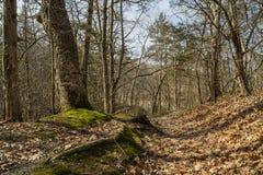 Ścieżka przez drewien Zdjęcie Stock