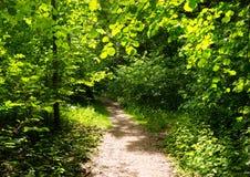 Ścieżka przez drewien Obraz Stock