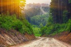 Ścieżka przez drewien przy zmierzchem Obraz Royalty Free