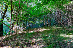 Ścieżka przez drzew Obrazy Royalty Free