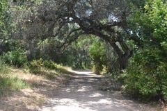 Ścieżka przez drzew Obrazy Stock