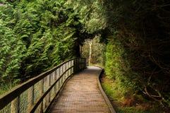 Ścieżka przez drzewa zdjęcia stock