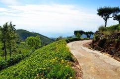 Ścieżka przez herbacianych plantacj Zdjęcia Royalty Free
