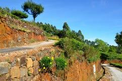 Ścieżka przez herbacianych plantacj w Haputale Fotografia Royalty Free