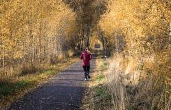 Ścieżka przez Kalvebod Fællen parka fotografia royalty free