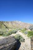 Ścieżka przez kwitnącej Kalifornia pustyni w kierunku gór Zdjęcia Stock