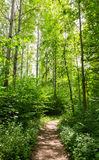 Ścieżka przez lasu Zdjęcie Royalty Free