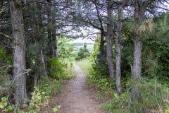 Ścieżka przez lasu pole Zdjęcia Stock
