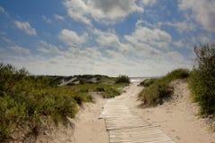 Ścieżka przez liepaja diun, Latvia Zdjęcie Stock