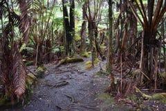 Ścieżka przez luksusowego tropikalnego lasu tropikalnego zdjęcia royalty free