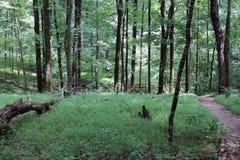 Ścieżka Przez Mamutowego jama parka narodowego Obrazy Royalty Free