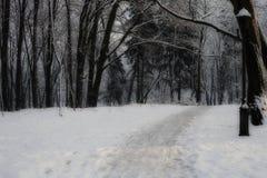 Ścieżka przez mglistego noc lasu obrazy stock