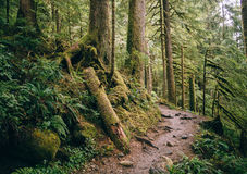Ścieżka przez Mt piekarza las państwowy Obraz Royalty Free