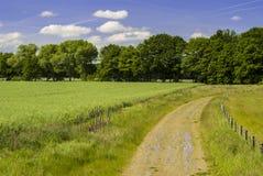 Ścieżka Przez natury fotografia royalty free