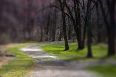 Ścieżka przez Parka obrazy royalty free