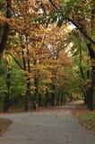 Ścieżka przez Parka Obraz Royalty Free