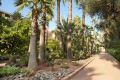 Ścieżka przez pięknego ogródu, Marrakesh fotografia royalty free