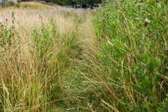 Ścieżka przez trawy Obrazy Stock