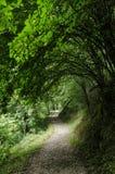 Ścieżka przez tunelowe gałąź obraz royalty free