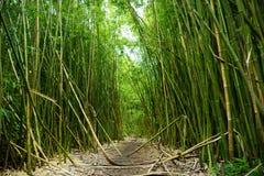 Ścieżka przez wysoki bambusowy forrest na drodze Hana na Maui, Hawaje Zdjęcia Stock
